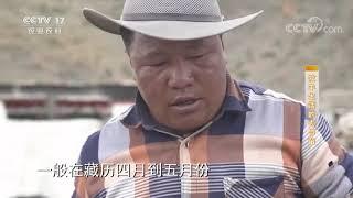 《攻坚日记》 20200731 牧羊生活的去与留|CCTV农业 - YouTube