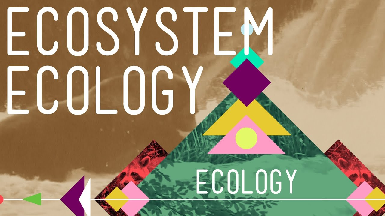 Ecosystem Ecology: Links in the Chain - Crash Course Ecology 7