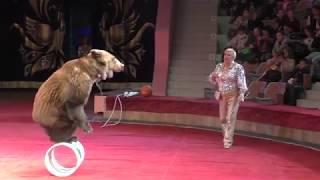 Огромные медведи на арене цирка. Huge bears in the circus arena.