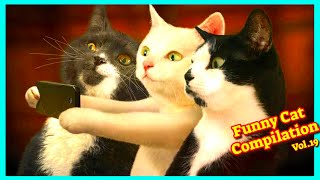 Funny Cats Compilation Vol.19 #Catfunnyvideos  Funniest Cats