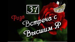 31 урок! (33 урока Женственности) Роза. Встреча с Высшим Я.