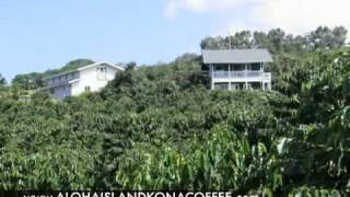 Kona Coffee Hawaiian Plantation Estate for sale