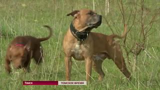 В РФ могут законодательно запретить держать диких животных