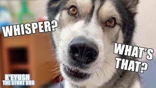 Teaching My Dog To Whisper. He Spits On ME! ASMR