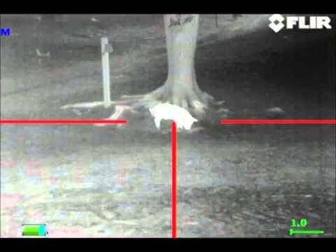 Flir Rs64 35 Thermal Hog Hunt Youtube