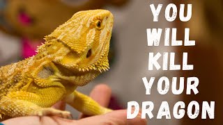 Don't Feed Mealworms To Dragons!