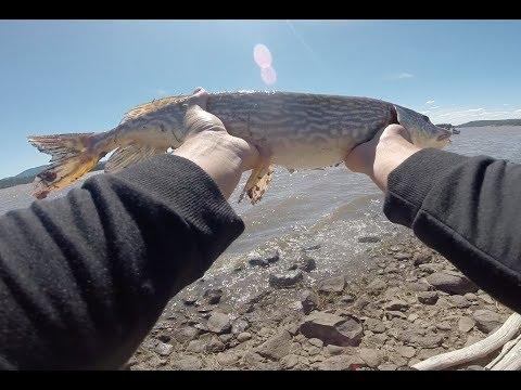 UPPER LAKE MARY FLAGSTAFF AZ Fishing For Anything !!