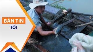 Đồng Nai: Cá rẻ như rau, dân chờ giải cứu | VTC1