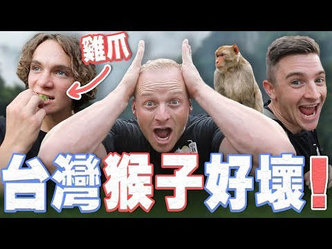 Face to Face with Wild Taiwan Monkeys  First time eating Chicken Feet