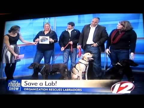 The Rhode Show - Save A Lab Interview 1/29/2013
