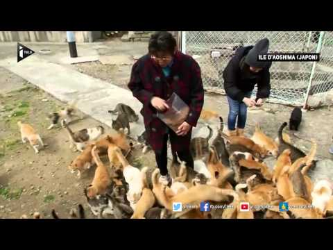 Japon: découvrez Aoshima, l'île aux chats
