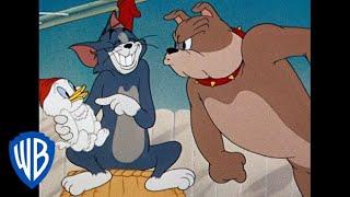 Tom & Jerry em Português | Brasil | Coletânea de desenhos clássicos | Tom, Jerry e Spike