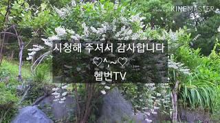 헵번의 뜨락ㅡ 빈도리 ( 정원,조경, 꽃가꾸기, 민화,…