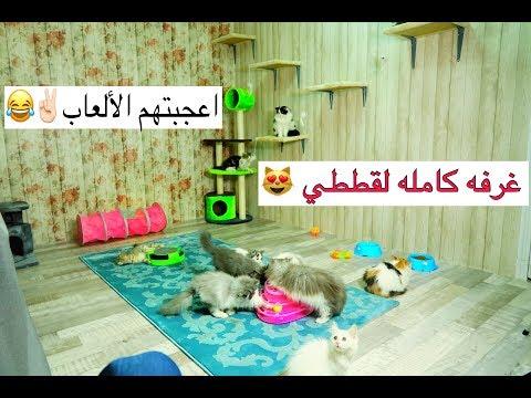 غرفه كامله لقططي 😍 شوفوا كيف لعبوا بالالعاب وكيف اعجبهم المكان حمااااس /  New room for cats