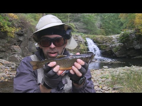 Flyfishing for some beautiful native brook trout salve for Trout fishing in wv