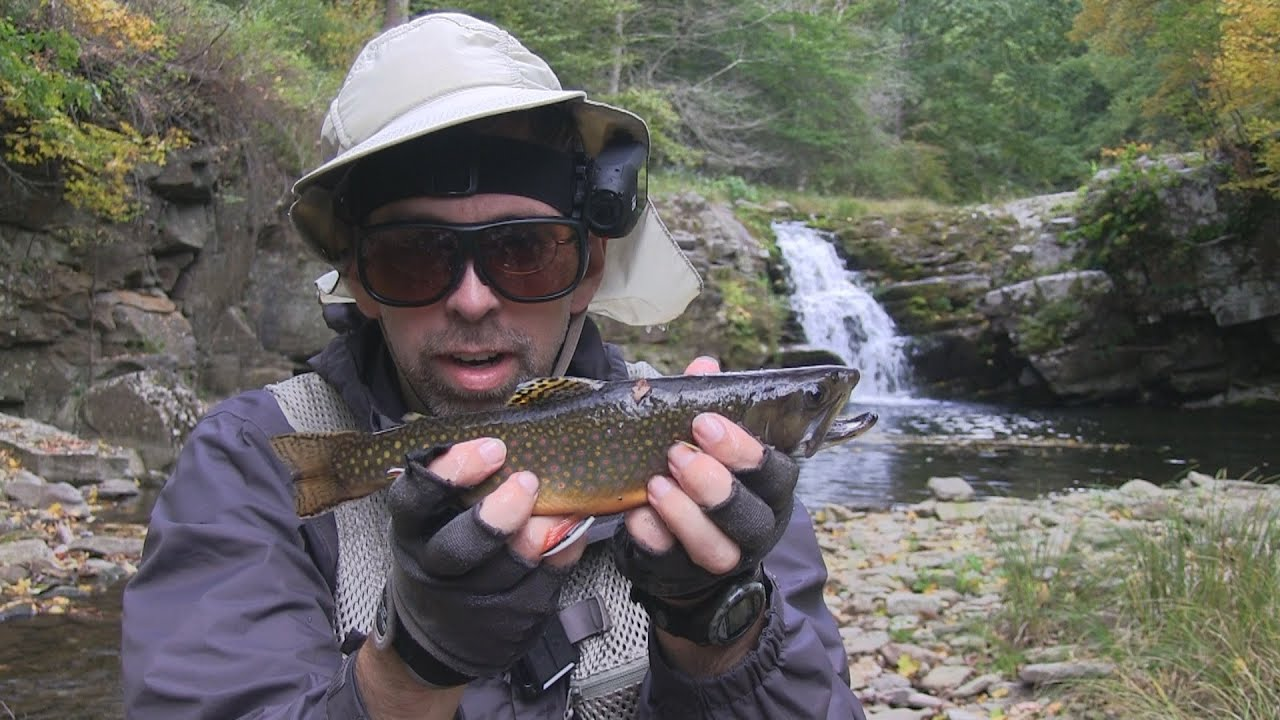 Seneca creek wv tenkara fly fishing youtube for Trout fishing in wv
