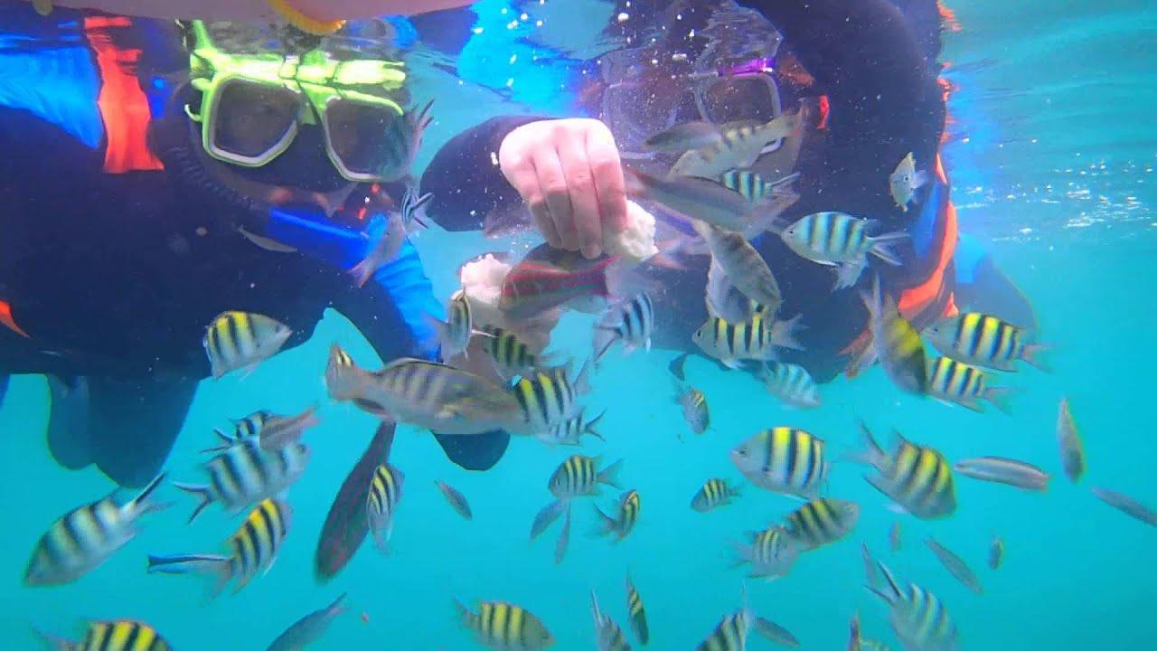 墾丁 萬里桐 水到魚行浮潛館 享有免費餵魚 海中拍照 0915117535 - YouTube