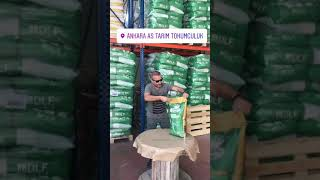 Çim tohumu peyzaj tarım Nusret green king dlf ahmet yücel ünlü ankara as tarım tohumculuk