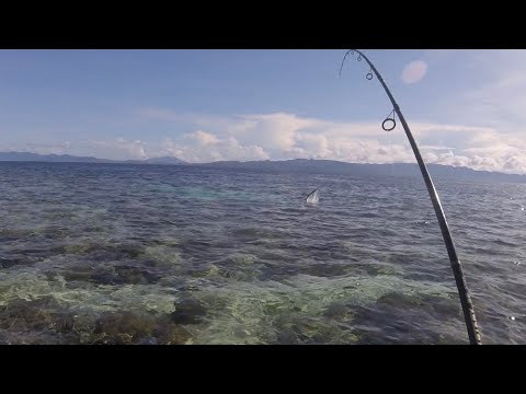 Very Angry Fish Attack