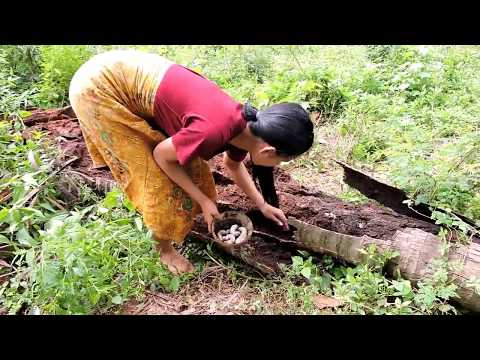 Pretty girl Find worm cook on rock – Pretty girl cooking worms eating delicious