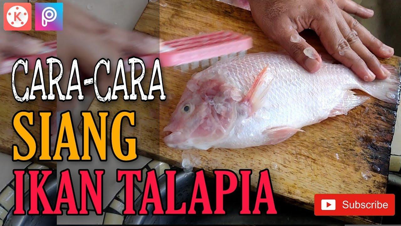 Cara Siang Ikan Talapia Cara Bersih Dan Potong Tips Trik Youtube