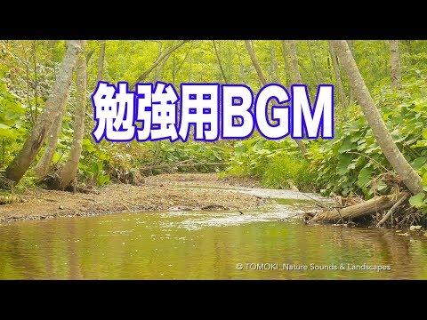 勉強用BGM / 森の中で聞く川のせせらぎと小鳥のさえずり / 癒し系作業用BGM