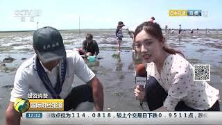 [国际财经报道]投资消费 海滩拾贝 日本民众夏日赶海乐趣多| CCTV财经