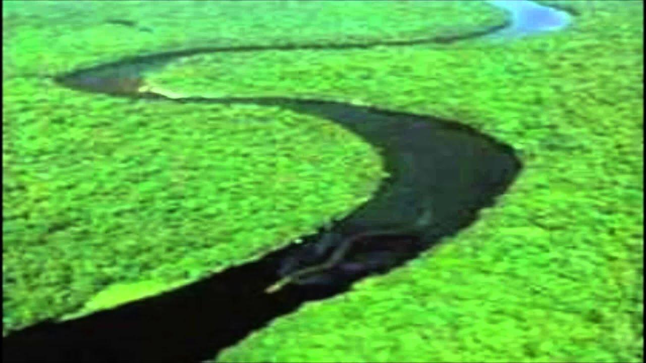 Caracteristicas de la vibora cascabel yahoo dating 6
