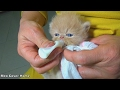 Kittens Meowing For Food | Hungry Kittens  2017 | Meo Cover Home