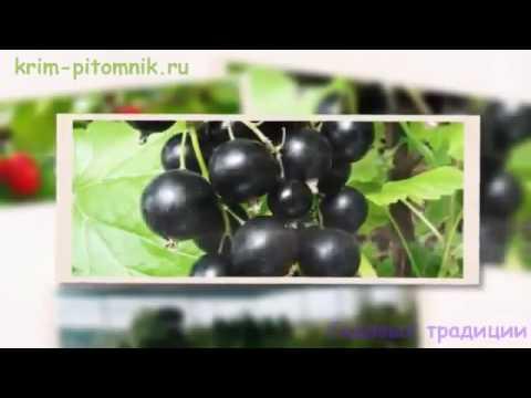 Где купить саженцы малины с доставкой Крым - YouTube