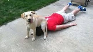 There's NO CHANCE you will SURVIVE THIS LAUGH CHALLENGE - The BEST DOG videos