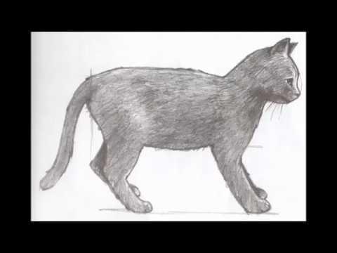 Как нарисовать лису wikiHow