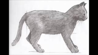Как нарисовать кошку)