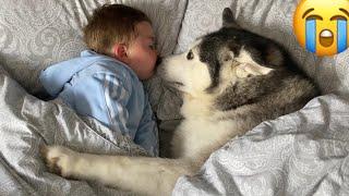 Husky Steals Babies Bed But Helps Him Fall Asleep! [CUTEST VIDEO EVER!!]