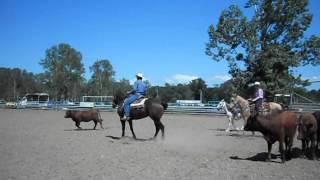 Cattle Drive les pradeaux 2012