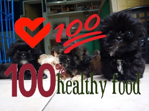 Healthy food for Shih Tzu [HD video]