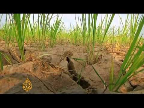 Looming famine in North Korea amid drought crisis