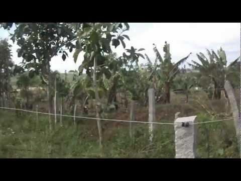 100 acres of land near Gundlupet near mysore