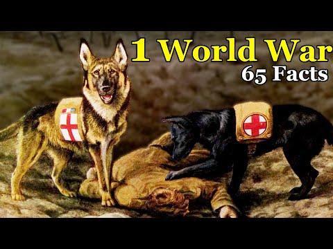 क्यूँ हुआ प्रथम विश्व युद्ध ? जानिये इतिहास हिंदी में || History - World War 1  (Part 1) Rahasya Max
