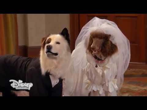 Dog with a Blog - Il matrimonio - Dall