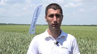 Открит ден на Агредо ЕООД в Дропла - сортове пшеница и ечемик