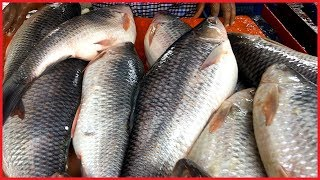 How To Cut & Cleaning A Rohu Carp Fish in Fish Market by Big Mustache Fish Cutter