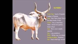 Indian cow Breeds