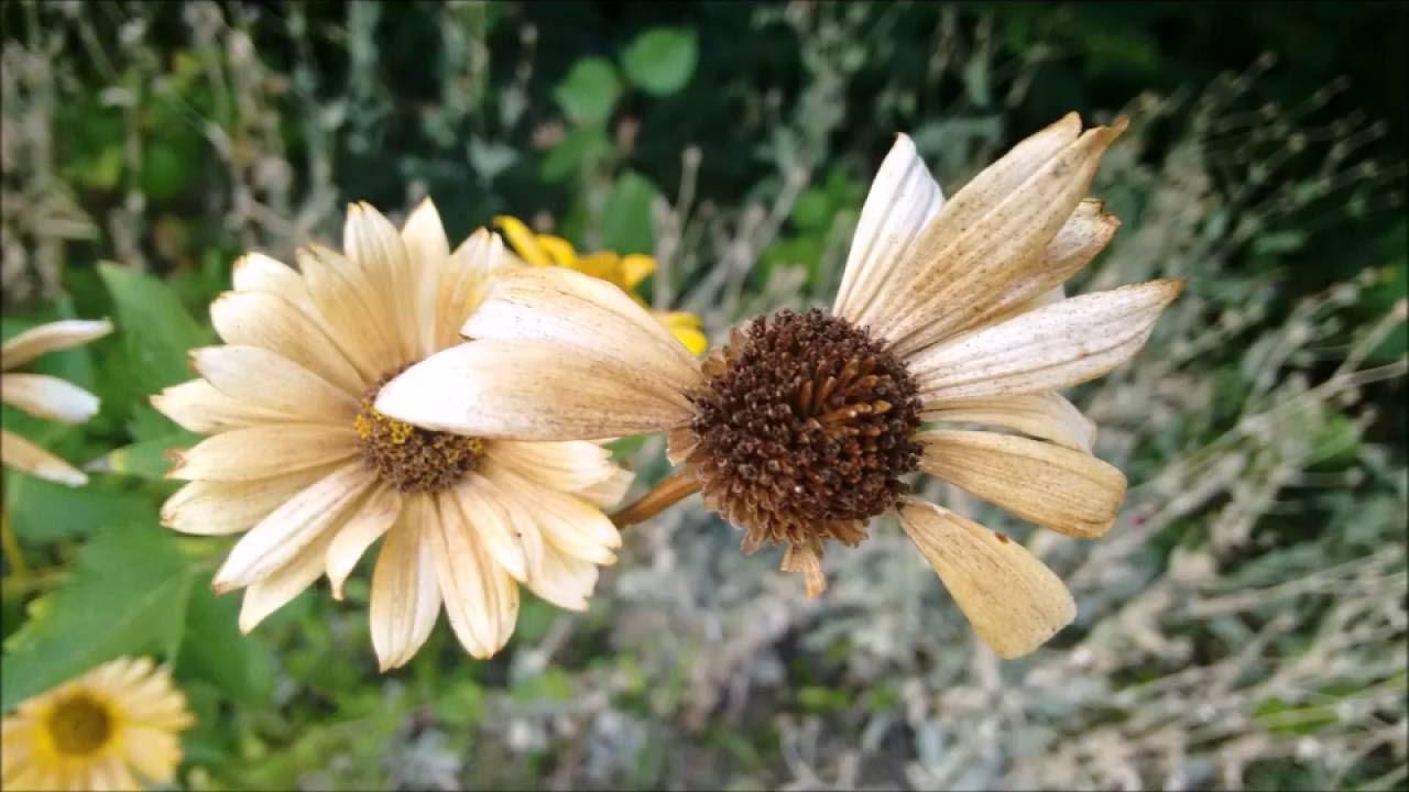 Garten Im September garten im september garden 2016