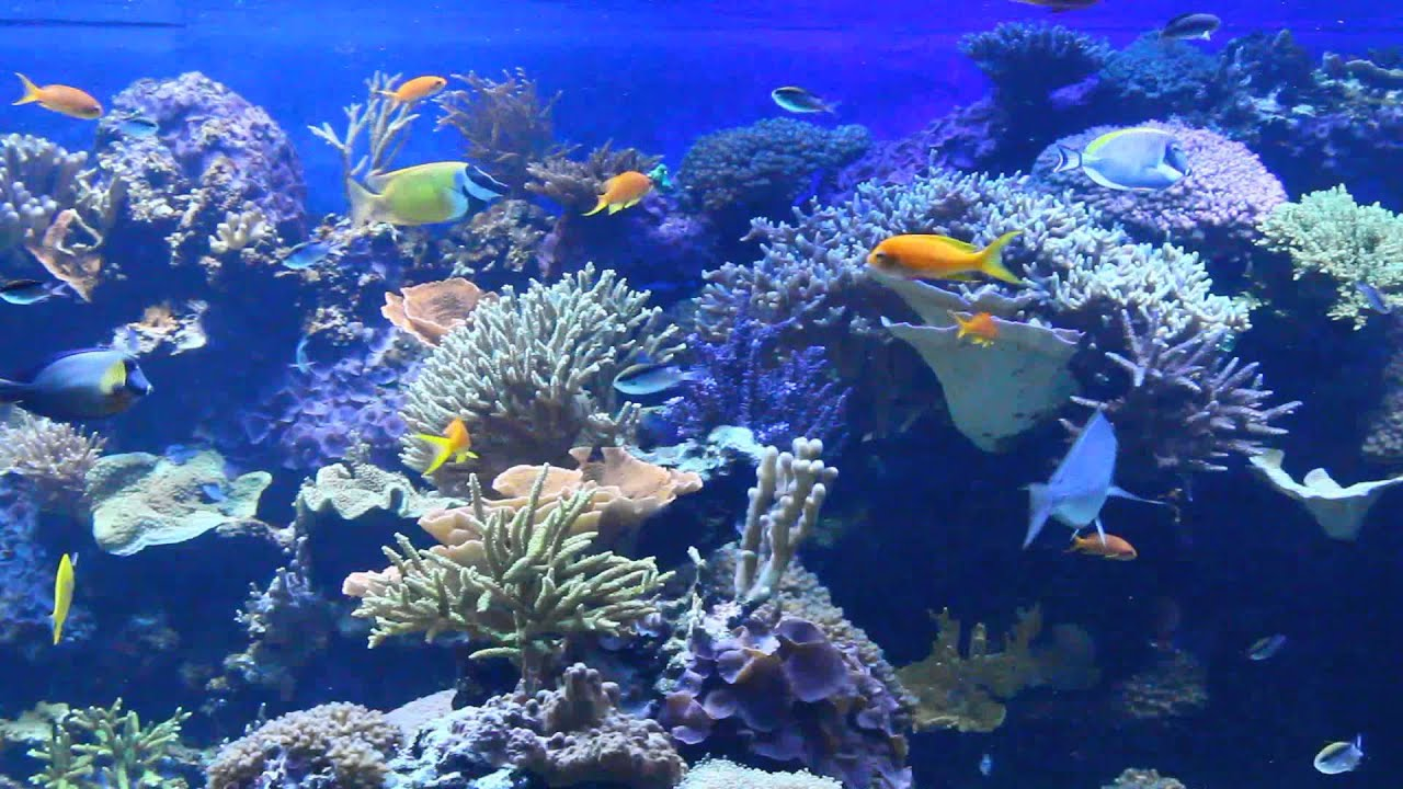Fish aquarium vancouver - Tons Of Tropical Fish Vancouver Aquarium