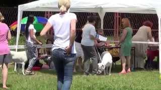 Dogo Argentino MAGGIE White Hunter BEST OF BREED Racibórz 07.06.2015