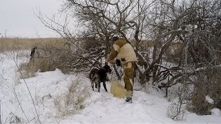 #7 Зимняя Ходовая Охота по Следам. Курцхаар. Закладка Солонца. Тропление по Следу.