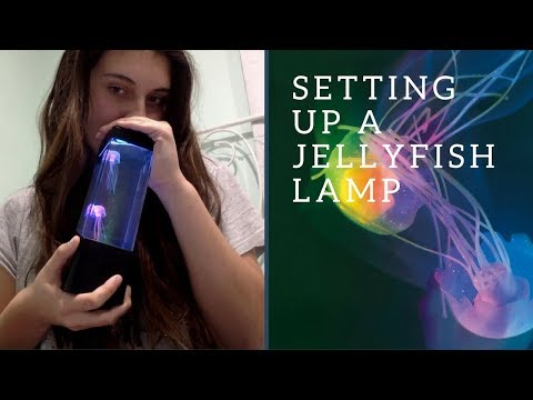 Setting Up A Jellyfish Lamp!!