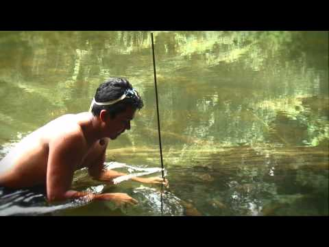 Poison Fishing With Barbasco