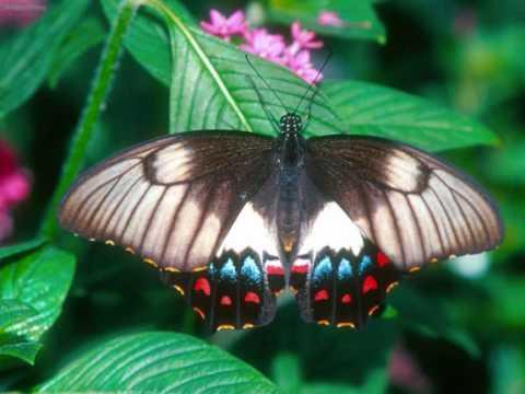 Mad Dog Mcrea - Butterfly